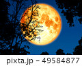 full crust moon back on silhouette plant and trees 49584877