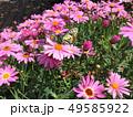 花にとまるアゲハ蝶 49585922