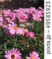 花にとまるアゲハ蝶 49585923