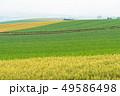 畑 麦 麦畑の写真 49586498