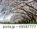 桜 桜並木 春の写真 49587777