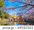 春爛漫の姫路城 49592563