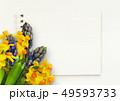 ヒヤシンス 風信子 ひやしんすの写真 49593733
