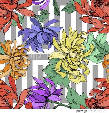 Vector Chrysanthemum floral botanical flowers. Engraved ink art. Seamless background pattern. 49595806