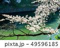 東京 千鳥ヶ淵の桜(早朝) 49596185