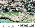 東京 千鳥ヶ淵の桜(早朝) 49596186