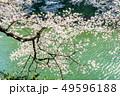 東京 千鳥ヶ淵の桜(早朝) 49596188