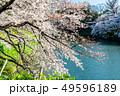 東京 千鳥ヶ淵の桜(早朝) 49596189