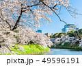 東京 千鳥ヶ淵の桜(早朝) 49596191