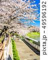 東京 千鳥ヶ淵の桜(早朝) 49596192