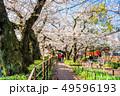 東京 千鳥ヶ淵の桜(早朝) 49596193