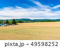 晴れ 畑 麦畑の写真 49598252