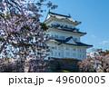 小田原城址公園の桜 49600005