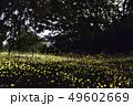 【夏イメージ】ヒメボタルの乱舞 49602669