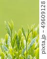 新茶の若葉 新芽の茶葉 49609128