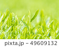 新茶の若葉 新芽の茶葉 49609132