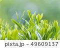 新茶の若葉 新芽の茶葉 49609137