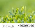 新茶の若葉 新芽の茶葉 49609140
