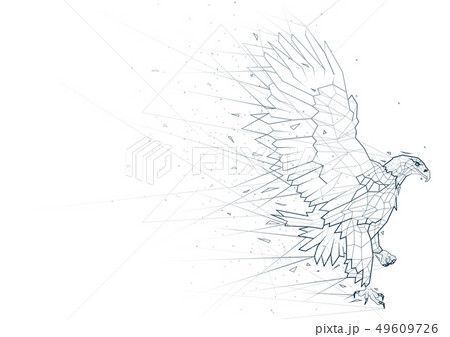 Abstract Eagle Low Poly Wireframe 49609726