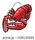 海老 オマール海老 ロブスターのイラスト 49616989