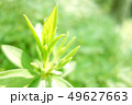 植物 自然風景 49627663