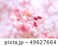 植物 自然風景 49627664