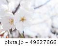植物 自然風景 49627666