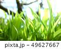 植物 自然風景 49627667