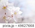 植物 自然風景 49627668
