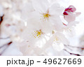 植物 自然風景 49627669