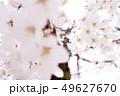 植物 自然風景 49627670