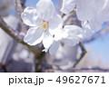 植物 自然風景 49627671