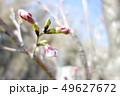 植物 自然風景 49627672