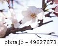 植物 自然風景 49627673