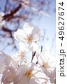 植物 自然風景 49627674
