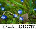 青 花 青色の写真 49627755