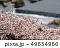 一目千本桜 白石川 春の写真 49634966