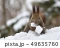 雪の中のエゾリス 49635760