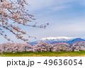 蔵王と一目千本桜 49636054