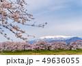 蔵王と一目千本桜 49636055