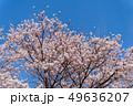 青空と桜 宮城大河原 49636207