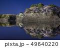 愛知県 名古屋城桜 夜景 49640220