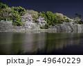 愛知県 名古屋城桜 夜景 49640229