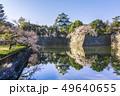 愛知県 名古屋城 桜 49640655