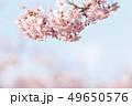 河津桜 桜 春の写真 49650576