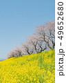 桜 春 青空の写真 49652680