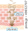 ターンオーバー 肌 断面図 49652707