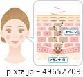 ターンオーバー 肌の断面図と女性 49652709
