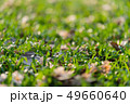 Green grass texture from a field  49660640