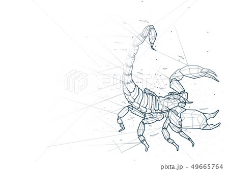 Abstract Scorpion Low Poly Wireframe 49665764